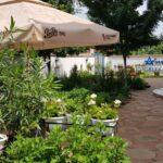 Gradina restaurantului grecesc Amvrosia din Pipera 01