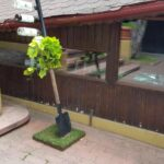 Torna Fratre restaurant traditional romanesc si balcanic in Bucuresti 30