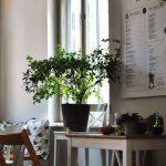 Therapy, bistro, in zona Calea Victoriei, strada Moxa