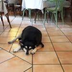 Restaurant italian traditional cu bucatar fara talent