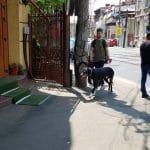 Pache Protopopescu la Traian, cu restaurantele La Conac, Taverna Zorba, Chong Qing