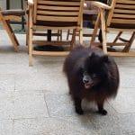 Oskar la Nido Secret Garden, terasa restaurantului din Aleea Alexandru