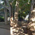 Parcul Conacului Hagianoff de pe Domeniul Manasia