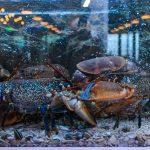 Peste si fructe de mare la Dancing Lobster